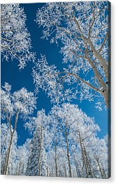 Frost Covered Trees On A Cold, Winter Day Acrylic Print by Karen Desjardin