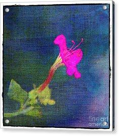 Fuchsia Flower Acrylic Print by Judi Bagwell