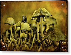 Fungus World Acrylic Print by Chris Lord