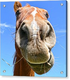 Funny Brown Horse Face Acrylic Print by Jennie Marie Schell