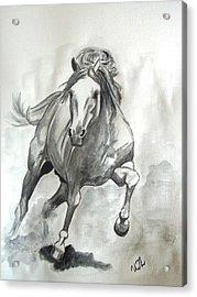 Galloping Horse Acrylic Print by Ursula  Thuleweit Laranjeiro