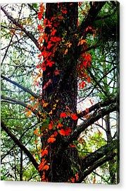 Garland Of Autumn Acrylic Print by Karen Wiles