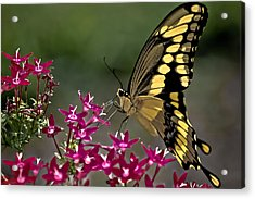 Gentle Giant Acrylic Print by DigiArt Diaries by Vicky B Fuller