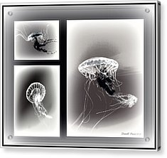 Ghostly Encounter Acrylic Print by Danielle  Parent