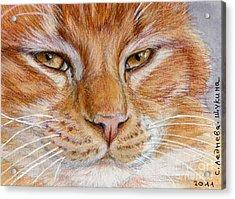 Ginger Cat  Acrylic Print by Svetlana Ledneva-Schukina