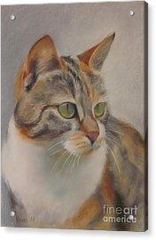 Ginger Acrylic Print by Sabina Haas