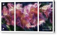 Gladiola Nebula Triptych Acrylic Print by Peter Piatt
