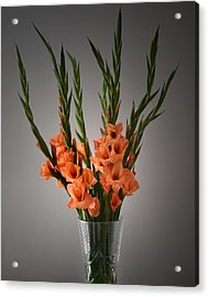 Gladiolus Portrait. Acrylic Print by Terence Davis
