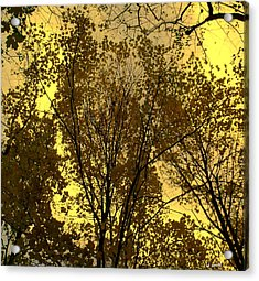 Glisten Acrylic Print by Ed Smith