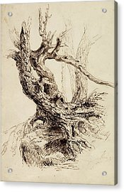 Gnarled Tree Trunk Acrylic Print by Thomas Cole