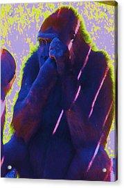Go Ape Acrylic Print by Todd Sherlock