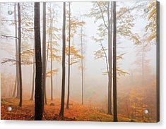 Golden Autumn Forest Acrylic Print by Evgeni Dinev
