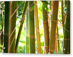 Golden Bamboo Acrylic Print by Jose Rodriguez