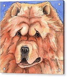 Golden Chow Chow Dog Acrylic Print by Cherilynn Wood