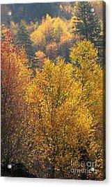 Golden Days Acrylic Print by Gary Suddath