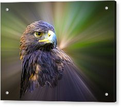 Golden Eagle Fade Acrylic Print by Steve McKinzie