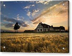 Golden Evening Acrylic Print by Debra and Dave Vanderlaan