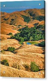 Golden Hills II Acrylic Print by Steven Ainsworth