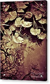Golden Pond Acrylic Print by Silvia Ganora