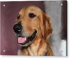 Golden Retriever Acrylic Print by Snake Jagger