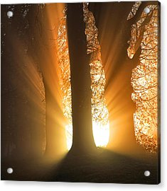 Good Morning Sunshine Acrylic Print by Martin Crush