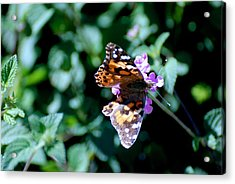 Got It Covered Acrylic Print by Eric Tressler
