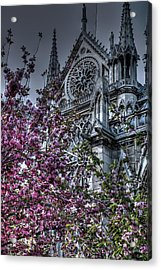 Gothic Paris Acrylic Print by Jennifer Ancker