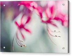 Grace. Natural Watercolor. Touch Of Japanese Style Acrylic Print by Jenny Rainbow