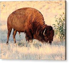 Grassland Giant Acrylic Print by Bob Bahlmann