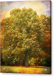 Graves Grove Acrylic Print by Jai Johnson