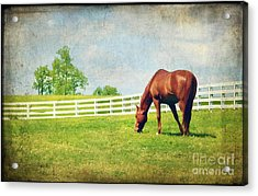 Grazing Acrylic Print by Darren Fisher