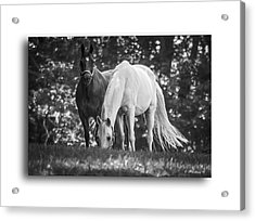 Grazing In Black And White Acrylic Print by Brian Wallace