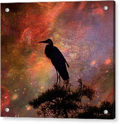 Great Blue Heron Viewing The Cosmos Acrylic Print by J Larry Walker