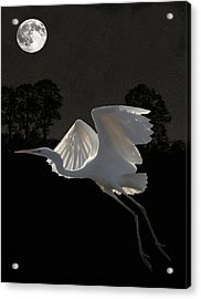 Great Egret In Flight Acrylic Print by Eric Kempson