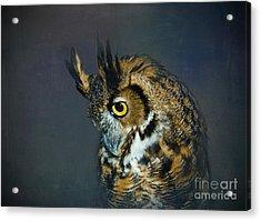 Great Horned Owl Acrylic Print by Betty LaRue