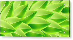Green Feathers, Full Frame Acrylic Print by Ralf Hiemisch