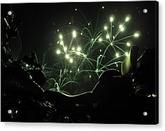 Green Fireworks Over A Soft Tail Acrylic Print by Tobey Brinkmann