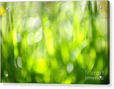 Green Grass In Sunshine Acrylic Print by Elena Elisseeva