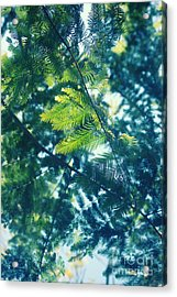 Green Acrylic Print by HD Connelly