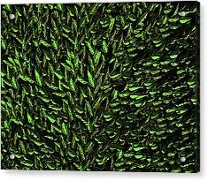 Green Leaf Acrylic Print by David Dehner