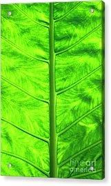 Green Leaf Acrylic Print by Sami Sarkis