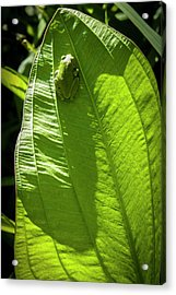Green On Green Acrylic Print by Albert Seger