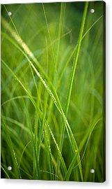 Green Prairie Grass Acrylic Print by Steve Gadomski