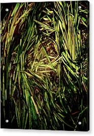 Green River Acrylic Print by Odd Jeppesen