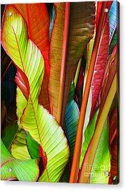 Greenhouse Palms 2 Acrylic Print by Stephen Mack