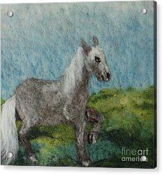 Grey Horse Acrylic Print by Nicole Besack
