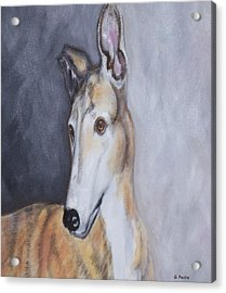 Greyhound In Thought Acrylic Print by George Pedro