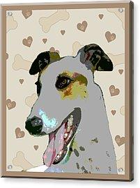 Greyhound Acrylic Print by One Rude Dawg Orcutt