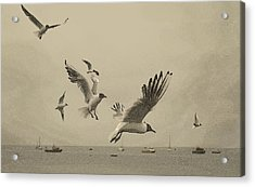Gulls Acrylic Print by Linsey Williams