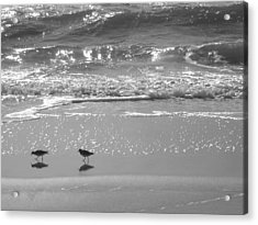 Gulls Taking A Walk Acrylic Print by Cindy Lee Longhini
